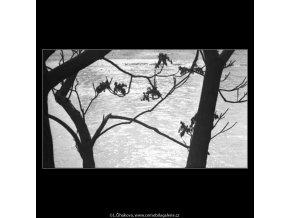 Holé větve (2688), žánry - Praha 1964 únor, černobílý obraz, stará fotografie, prodej