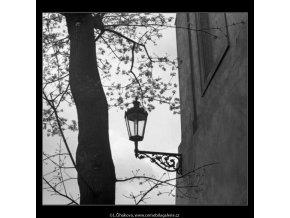 Lucerna a větve (2877-1), žánry - Praha 1964 květen, černobílý obraz, stará fotografie, prodej