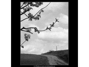Cesta (2886), žánry - Praha 1964 květen, černobílý obraz, stará fotografie, prodej