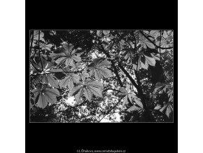Podzimní listí (3244-5), žánry - Praha 1964 říjen, černobílý obraz, stará fotografie, prodej