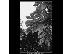 Podzimní listí (3244-6), žánry - Praha 1964 říjen, černobílý obraz, stará fotografie, prodej