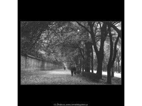 Podzim v aleji (3281), žánry - Praha 1964 říjen, černobílý obraz, stará fotografie, prodej