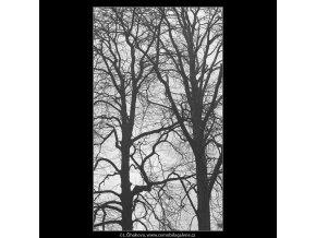 Stromy (3343-13), žánry - Praha 1964 listopad, černobílý obraz, stará fotografie, prodej