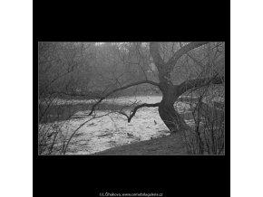 Kačeny na jezírku (3580-1), žánry - Praha 1965 březen, černobílý obraz, stará fotografie, prodej