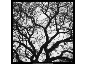 Koruna stromu (3586-1), žánry - Praha 1965 březen, černobílý obraz, stará fotografie, prodej