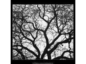 Koruna stromu (3586-2), žánry - Praha 1965 březen, černobílý obraz, stará fotografie, prodej