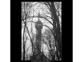 Mezi stromy (3654), Praha 1965 duben, černobílý obraz, stará fotografie, prodej
