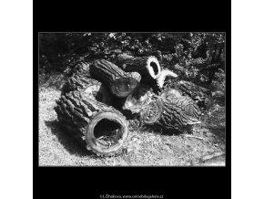 Kmeny (3696), žánry - Praha 1965 květen, černobílý obraz, stará fotografie, prodej