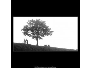 Strom a kluci (3756), žánry - Praha 1965 červen, černobílý obraz, stará fotografie, prodej