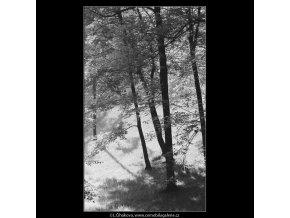 Stromy a slunce (3813), žánry - Praha 1965 červenec, černobílý obraz, stará fotografie, prodej