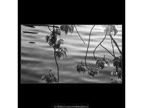 Větévka nad vodou (4066), žánry - Praha 1965 říjen, černobílý obraz, stará fotografie, prodej
