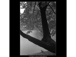 Strom a voda (4100), žánry - Praha 1965 říjen, černobílý obraz, stará fotografie, prodej
