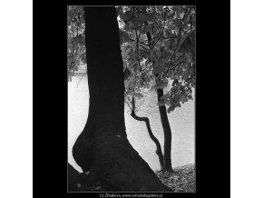 Strom (4101), žánry - Praha 1965 říjen, černobílý obraz, stará fotografie, prodej