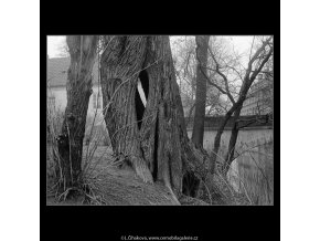 Na břehu Čertovky (4284-11), Praha 1966 únor, černobílý obraz, stará fotografie, prodej