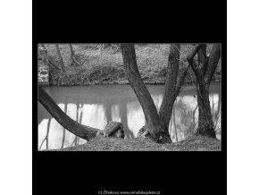 Stromy u vody (4284-15), Praha 1966 únor, černobílý obraz, stará fotografie, prodej