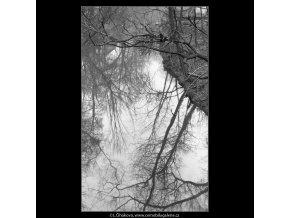 Odraz korun na hladině (4284-23), Praha 1966 únor, černobílý obraz, stará fotografie, prodej