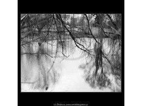 Fantazie větví (4364-2), žánry - Praha 1966 březen, černobílý obraz, stará fotografie, prodej