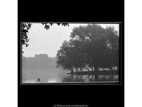 Stromy na Střeleckém ostrově (4526-1), žánry - Praha 1966 květen, černobílý obraz, stará fotografie, prodej