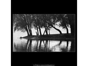 Stromy na Střeleckém ostrově (4526-2), žánry - Praha 1966 květen, černobílý obraz, stará fotografie, prodej
