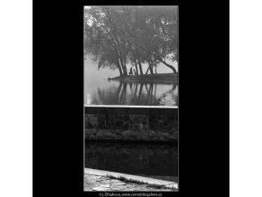 Stromy na Střeleckém ostrově (4526-3), žánry - Praha 1966 květen, černobílý obraz, stará fotografie, prodej