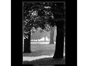 Stromy (4527), žánry - Praha 1966 květen, černobílý obraz, stará fotografie, prodej