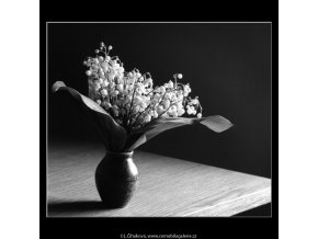 Konvalinky (4545-1), žánry - Praha 1966 květen, černobílý obraz, stará fotografie, prodej