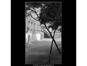 Dva zkřížené stromy (4855), žánry - Praha 1966 září, černobílý obraz, stará fotografie, prodej