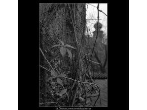 Podzimní lístečky (4870-1), žánry - Praha 1966 říjen, černobílý obraz, stará fotografie, prodej