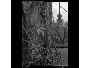 Podzimní lístečky (4870-2), žánry - Praha 1966 říjen, černobílý obraz, stará fotografie, prodej