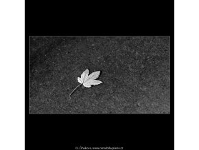 List na zemi (4873), žánry - Praha 1966 říjen, černobílý obraz, stará fotografie, prodej
