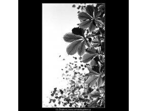 Podzimní listí (4874-2), žánry - Praha 1966 říjen, černobílý obraz, stará fotografie, prodej