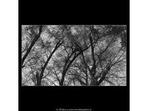 Podzimní listí (4874-4), žánry - Praha 1966 říjen, černobílý obraz, stará fotografie, prodej