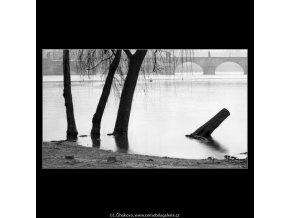 Stromy (5028-7), žánry - Praha 1966 prosinec, černobílý obraz, stará fotografie, prodej