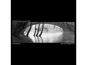 Stromy (5028-8), žánry - Praha 1966 prosinec, černobílý obraz, stará fotografie, prodej