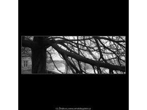 Strom (5029), žánry - Praha 1966 prosinec, černobílý obraz, stará fotografie, prodej