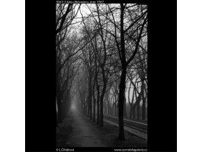 Alej u Belvederu (5067-2), žánry - Praha 1967 únor, černobílý obraz, stará fotografie, prodej
