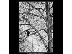 Stromy a ptáci (5078-3), žánry - Praha 1967 únor, černobílý obraz, stará fotografie, prodej