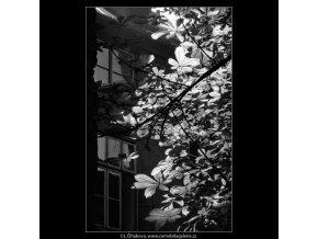 Kaštanové listí (5622), Praha 1967 září, černobílý obraz, stará fotografie, prodej