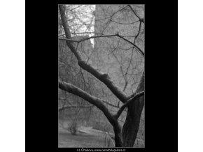 Pražské stromy (5117-4), žánry - Praha 1967 únor, černobílý obraz, stará fotografie, prodej
