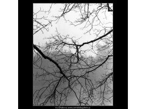 Větvoví nad řekou (5140), žánry - Praha 1967 únor, černobílý obraz, stará fotografie, prodej