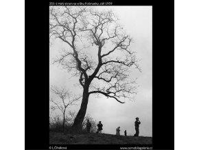 Holý strom na vršku Folimanky (351-1), žánry - Praha 1959 září, černobílý obraz, stará fotografie, prodej