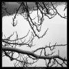 Zasněžené větve (2034), žánry - Praha 1963 zima, černobílý obraz, stará fotografie, prodej
