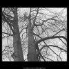 Stromy (3343-9), žánry - Praha 1964 listopad, černobílý obraz, stará fotografie, prodej