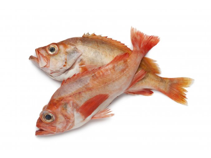 Pair of redfishes on white background