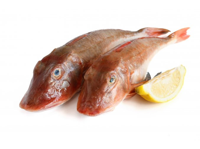 two fresh tub gurnard with sliced lemon over white background