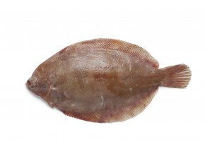 Single Lemon sole fish on white background