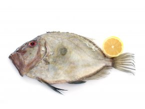 San Pierre Fish in front of white background