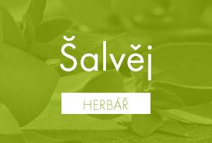 Bio herbář: Šalvěj