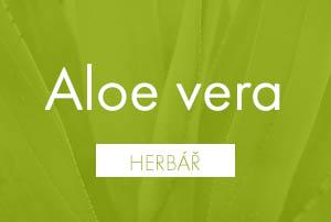 Bio herbář: Aloe vera