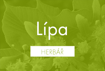 Bio herbář: Lípa